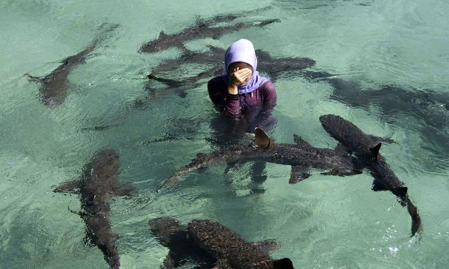 Laut Karimunjawa tempat wisata bawah laut di Indonesia.