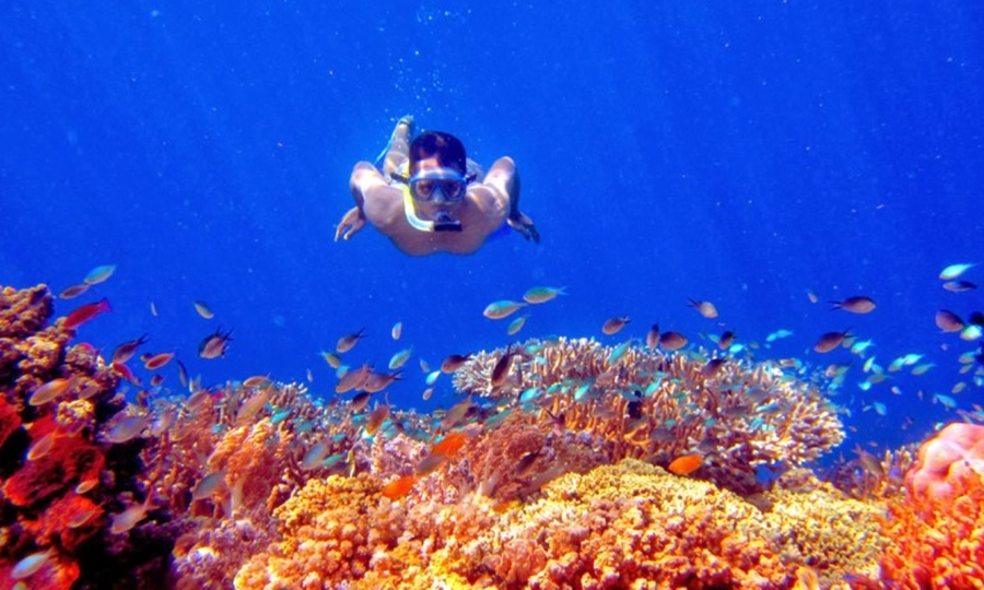 Laut Pulau Menjangan pesona wisata laut di Indonesia