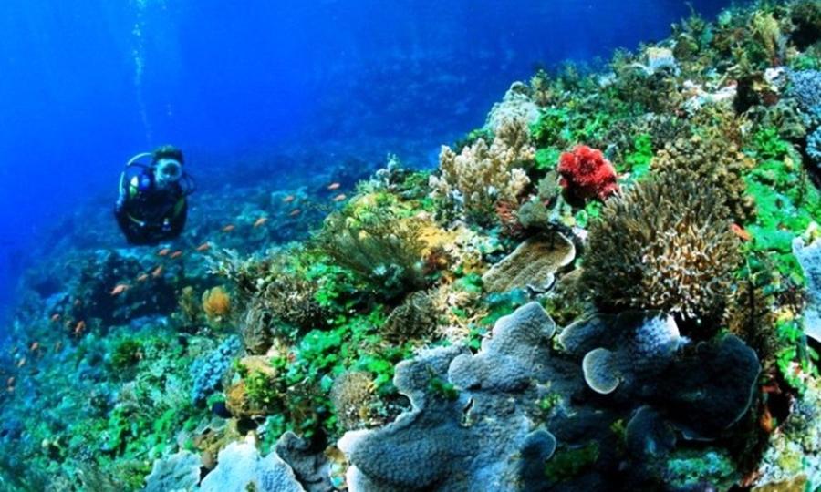 Laut Selat Pantar pesona wisata laut di Indonesia.