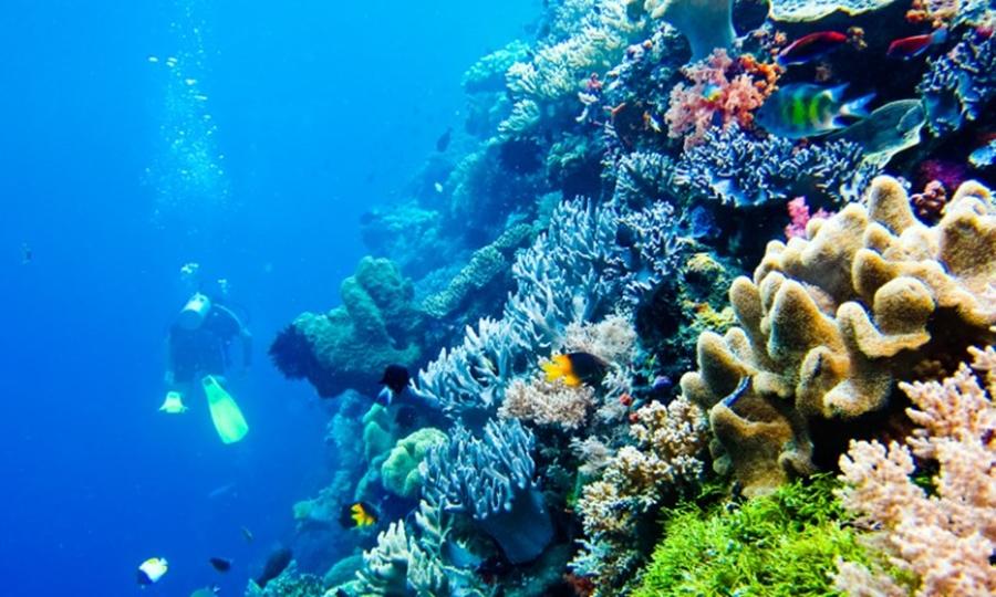 Laut Wakatobi pesona wisata laut di Indonesia.