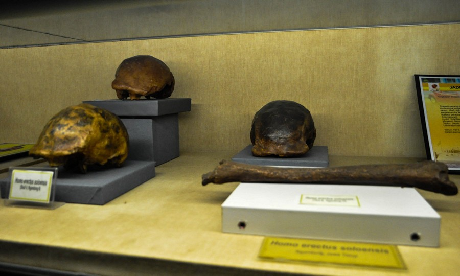 Batu-batu unik di Museum Geologi Bandung