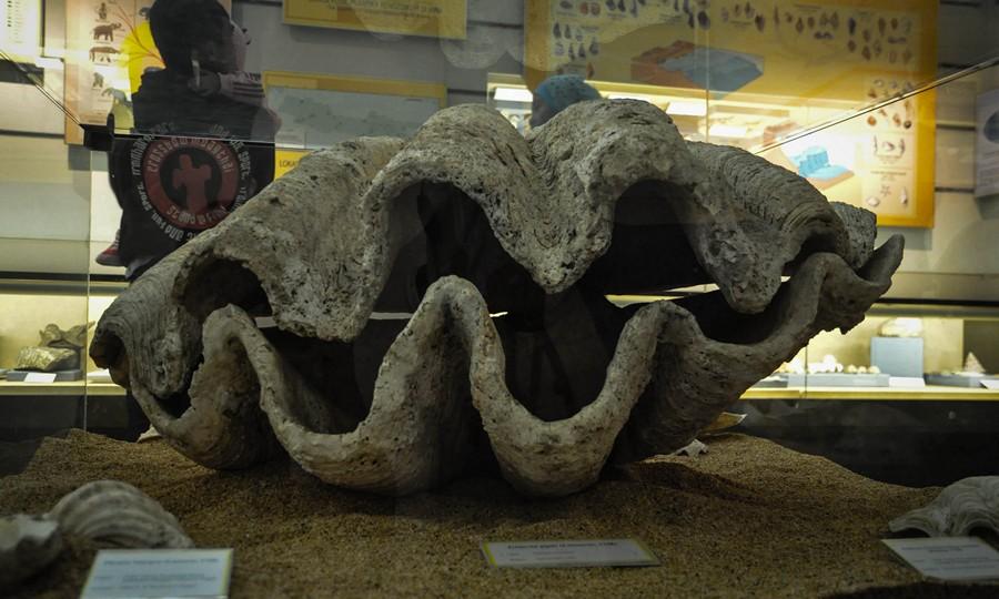 Benda Laut di Museum Geologi Bandung
