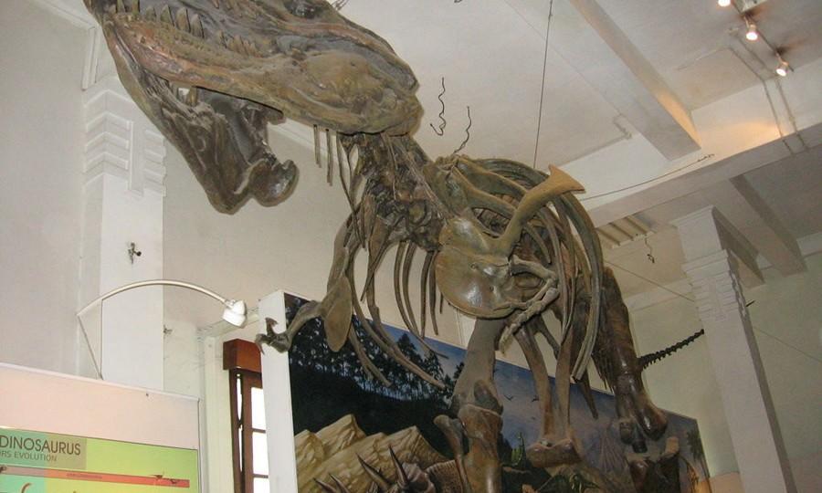 Kerangka Fosil di Moseum Geologi Bandung
